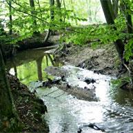 Gewässerentwicklung und -renaturierung